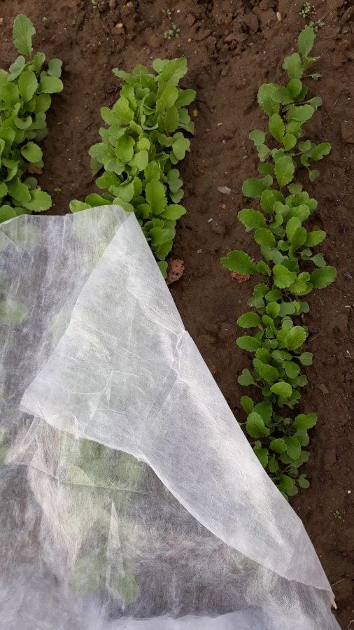 redkvička prikrytá netkanou textíliou