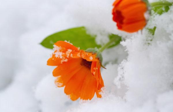 netkaná textília na ochranu pred mrazom