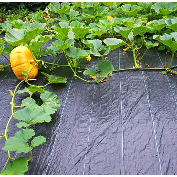 tkaná textília pri pestovaní tekvice