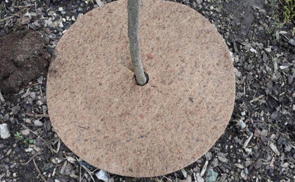 kokos mulc